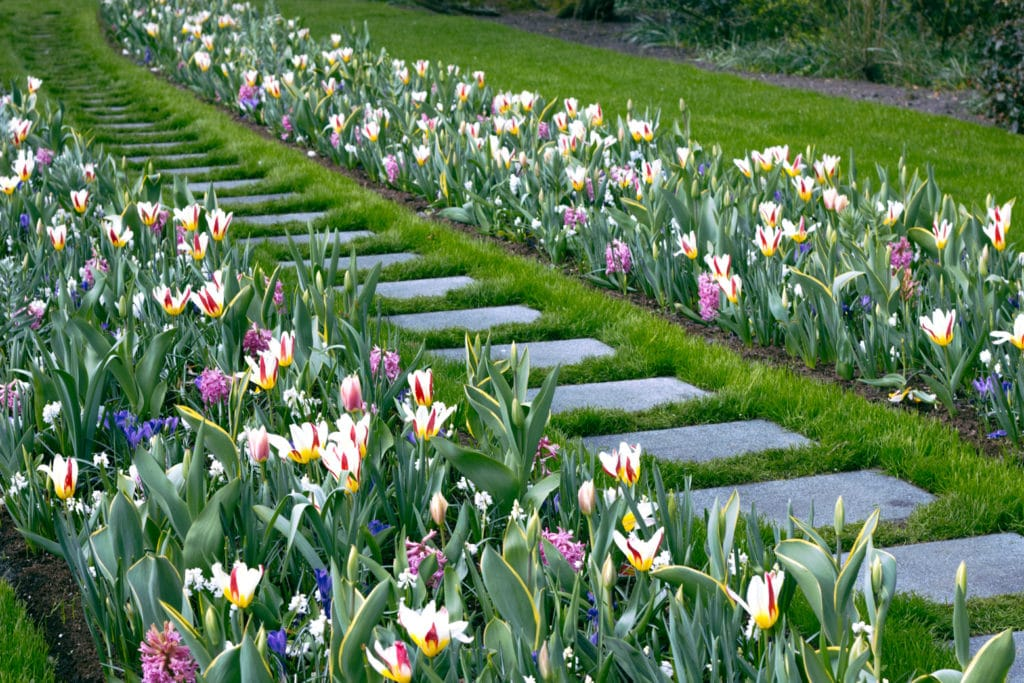 Tulips and Flowers