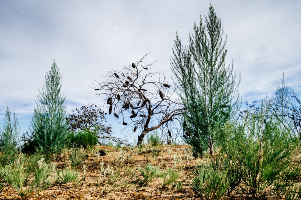 Native Plant Species